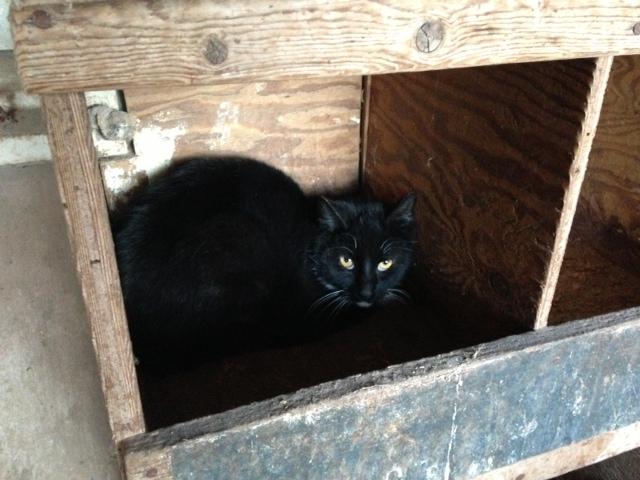 Barn Cat.JPG