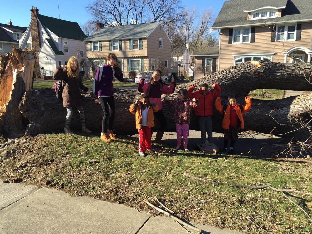 I picked up these 7 crazies from school to discover the driveway completely blocked - this pic was taken because,for a brief moment, one of them was certain they could move the tree.😂