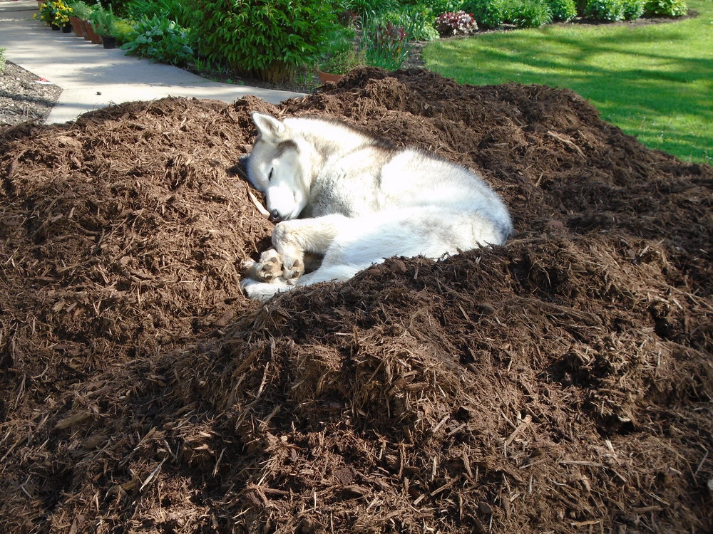 Photo courtesy of vermontvalleyfarm.wordpress.com featuring the ever-ambitious dog-mulch combo pack.
