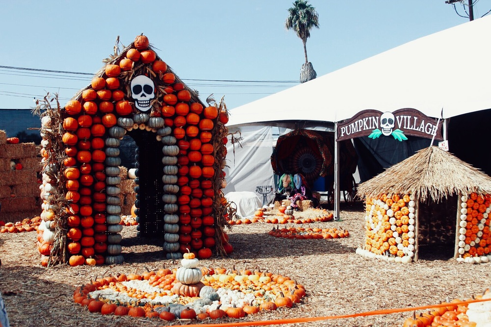 Pumpkin Village ! So cute