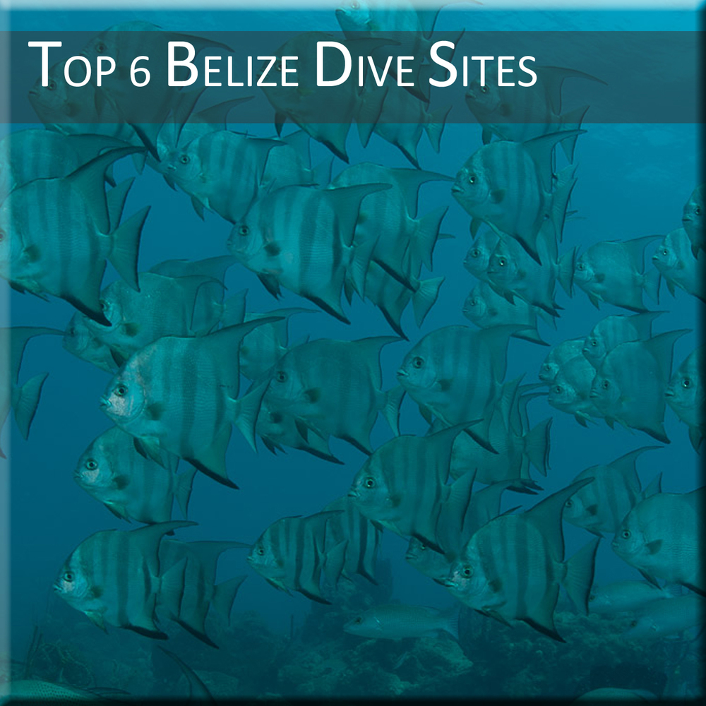 Top-6-Belize-Dive-Sites.jpg