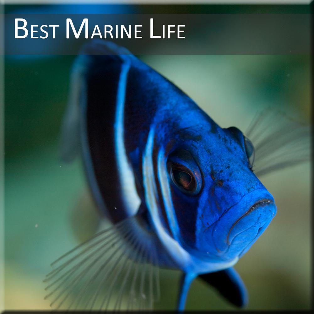 Marine-Life-of-Belize.jpg