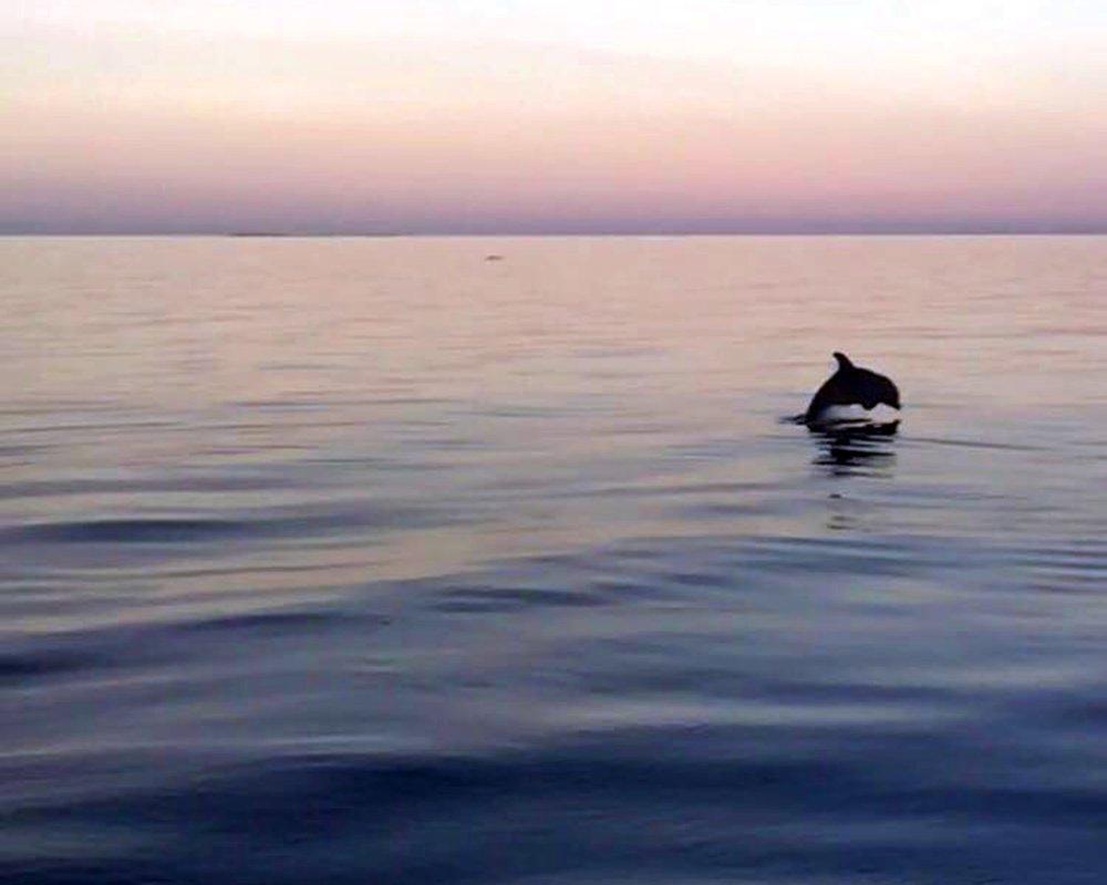 dolphin-compressman.jpg