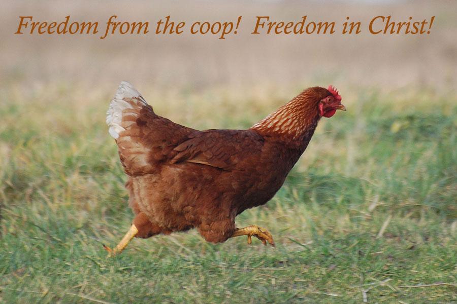 Hen Free.jpg