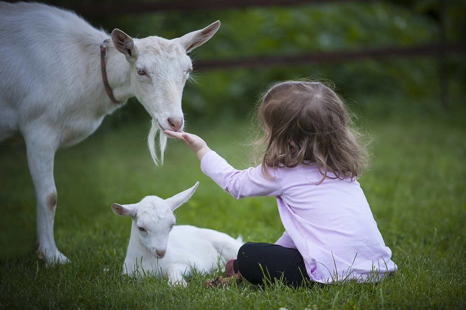 goat-3017394_960_720.jpg