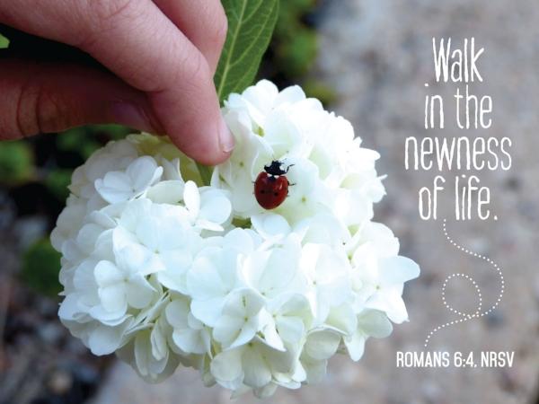 ladybug_15687ac.jpg