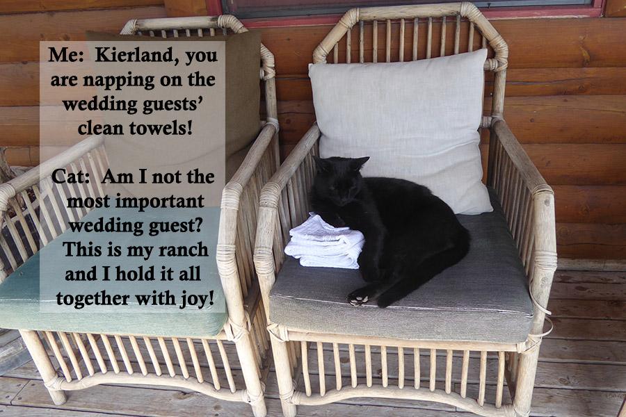 Ranch Cat.jpg