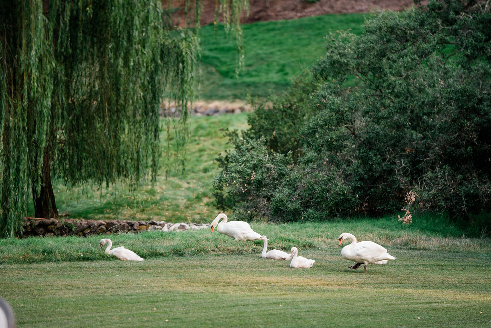 jon-chu-kristin-hodge-meadowood-napa-valley-calistoga -098.jpg