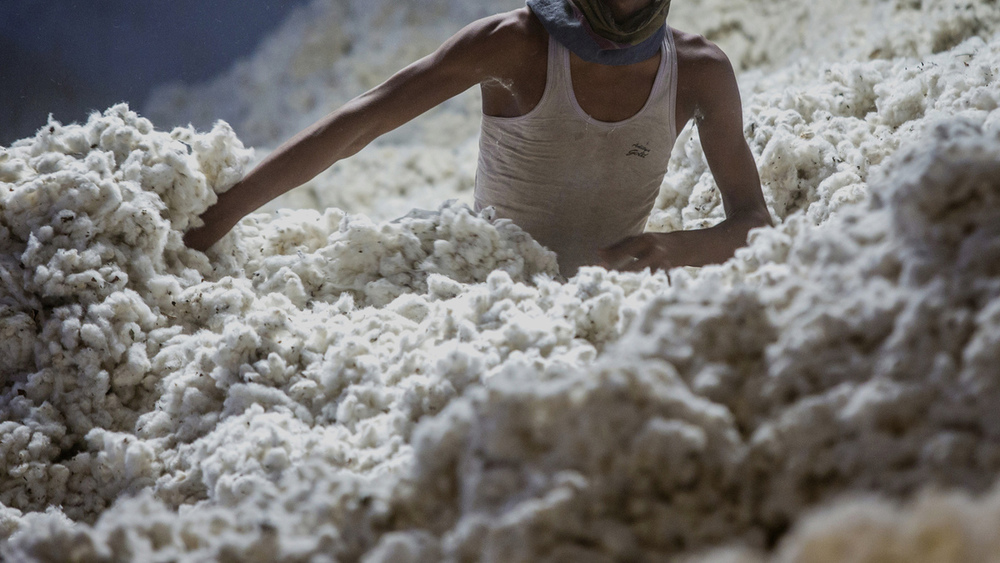 A worker wades through cotton at a ginning mill in Pilibanga, Rajasthan, India, on Wednesday, Nov. 5, 2014. Photographer: Prashanth Vishwanathan/Bloomberg