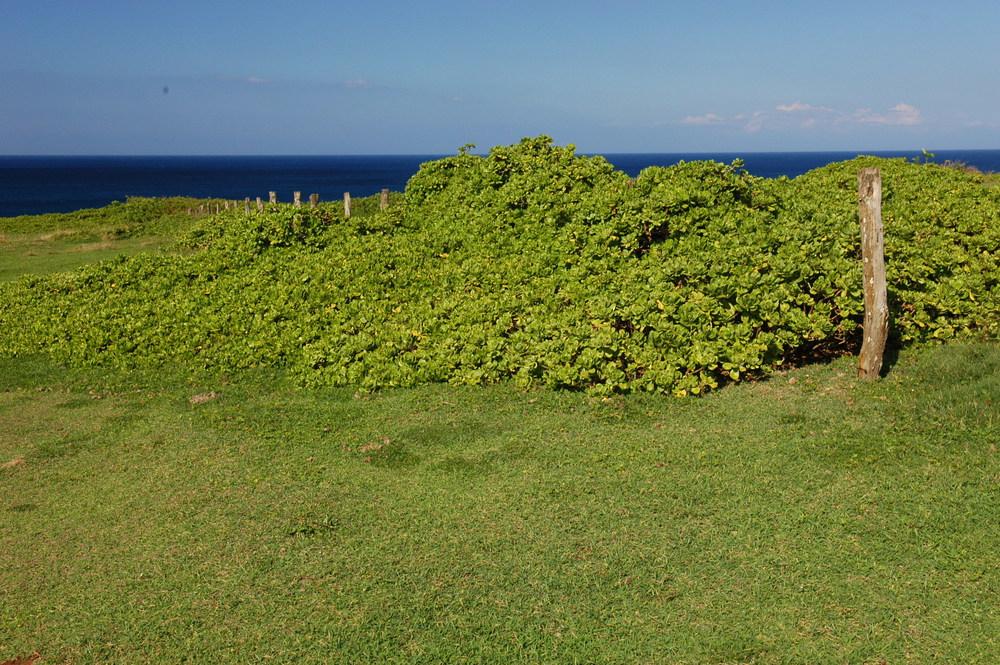 Haiku, Maui