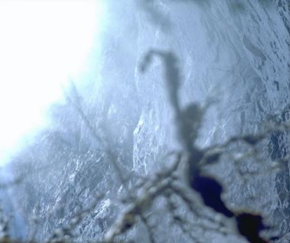 UNTITLED (Glare of Naupaka leaf sea wedges)