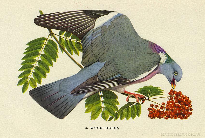 woodland-birds02.jpg