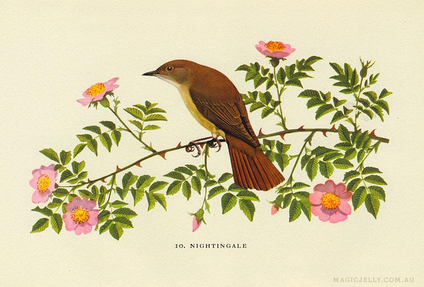 woodland-birds03.jpg