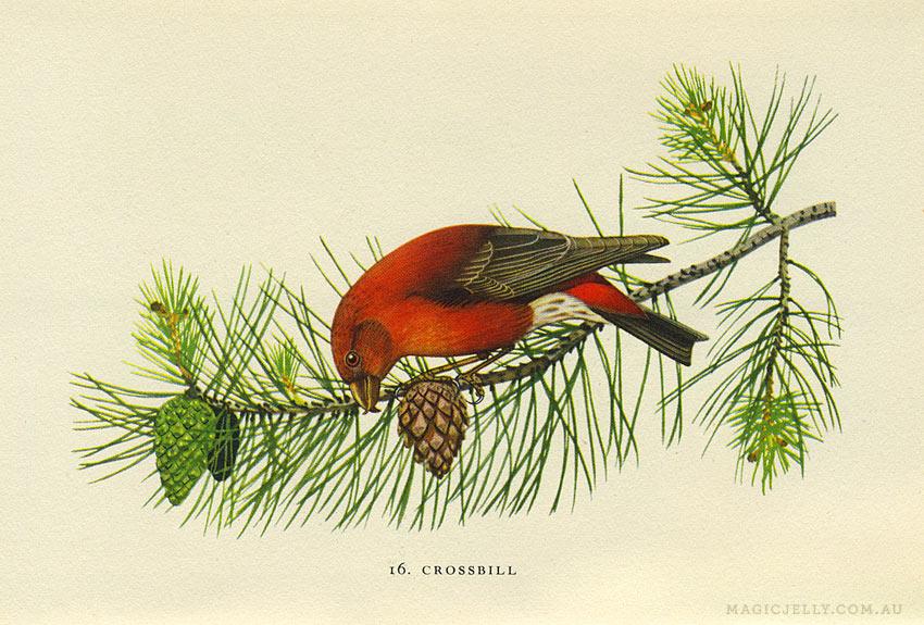 woodland-birds04.jpg