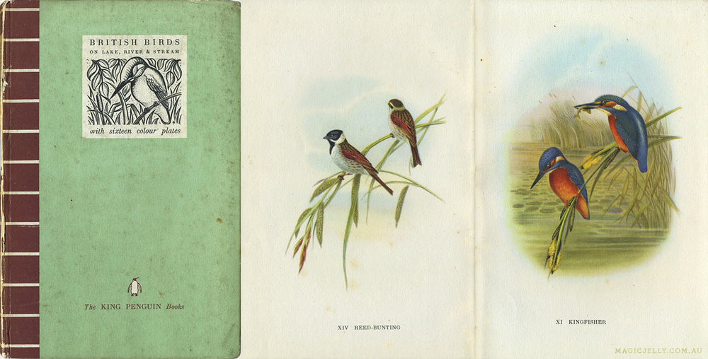 British Birds on Lake, River & Stream , written by Phyllis Barclay-Smith, illustrated by John Gould. 1939.