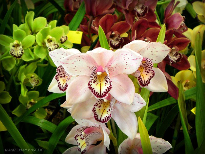 orchids-14.jpg