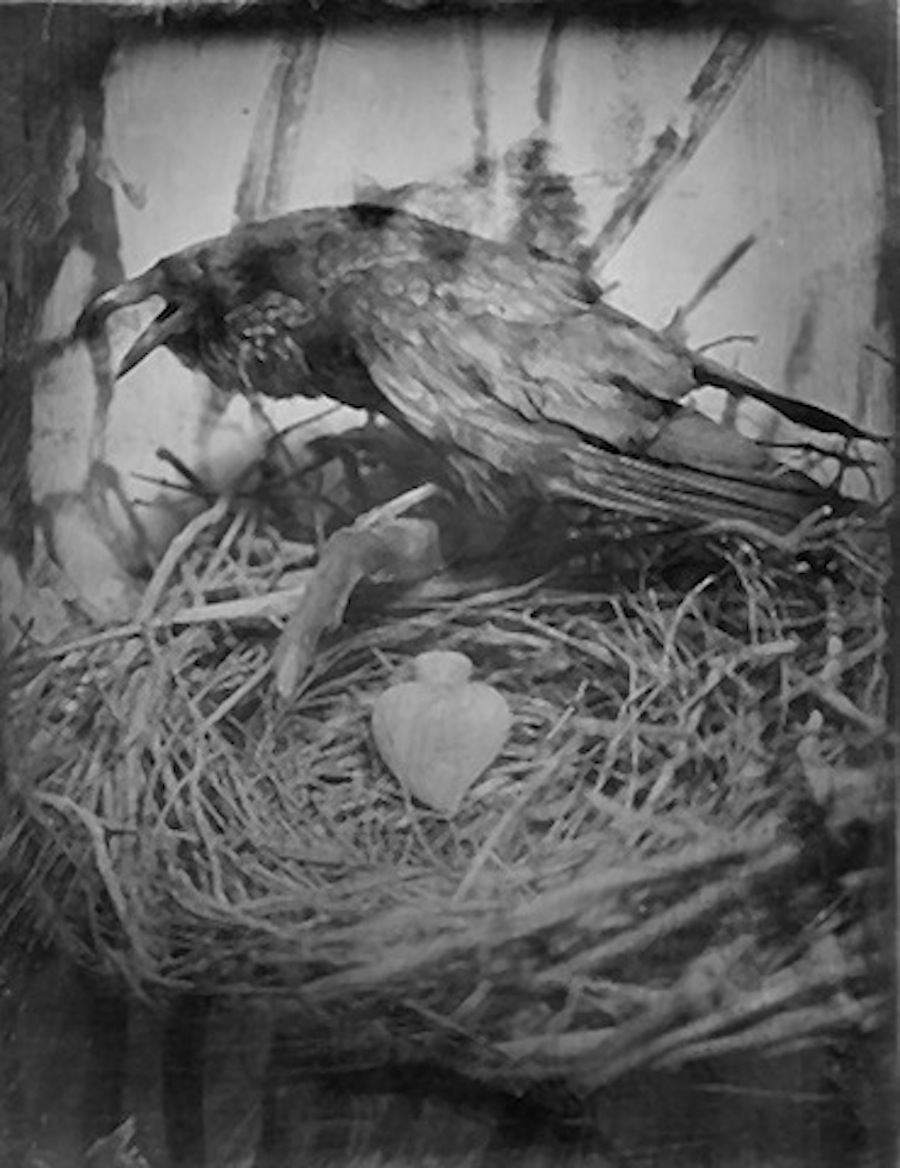 "Raven Heart  10"" x 8""  Collodion"