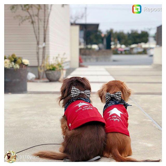 #doginbowtie #dressydogs #dapperdog #doglovers #dogsofinstagram #dogcollar #dogbowtie #dogfashion #dogtie #petaccessory #petstagram #love #lovecat #lovedog #lovepets #fancycats #catbows #bowtiedogcollar #sfetsy #instapets #insta_dogs #usagiteam #etsy #cutepetsposts #cutepets #cutepet #dackshund