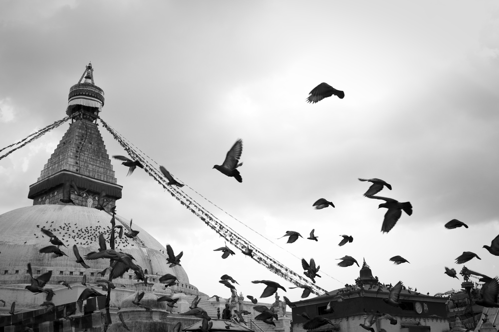 Boudastoopa Birds BW copy 2.jpg