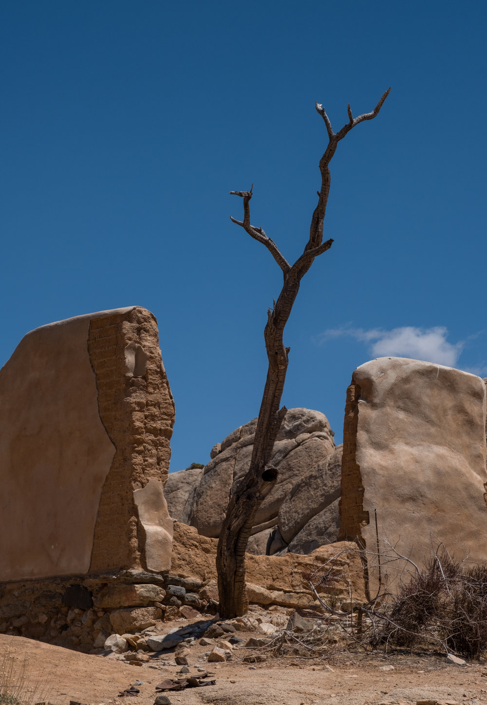 JoshuaTreeNationalMonument2018_JohnFredricks_1.jpg