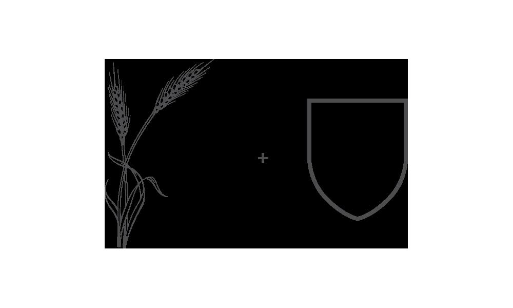 Proceso-logotipo-birrak.png