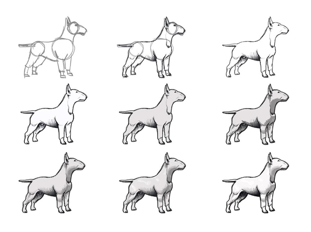 Bocetos_Bull_terrier-emerreuve.jpg