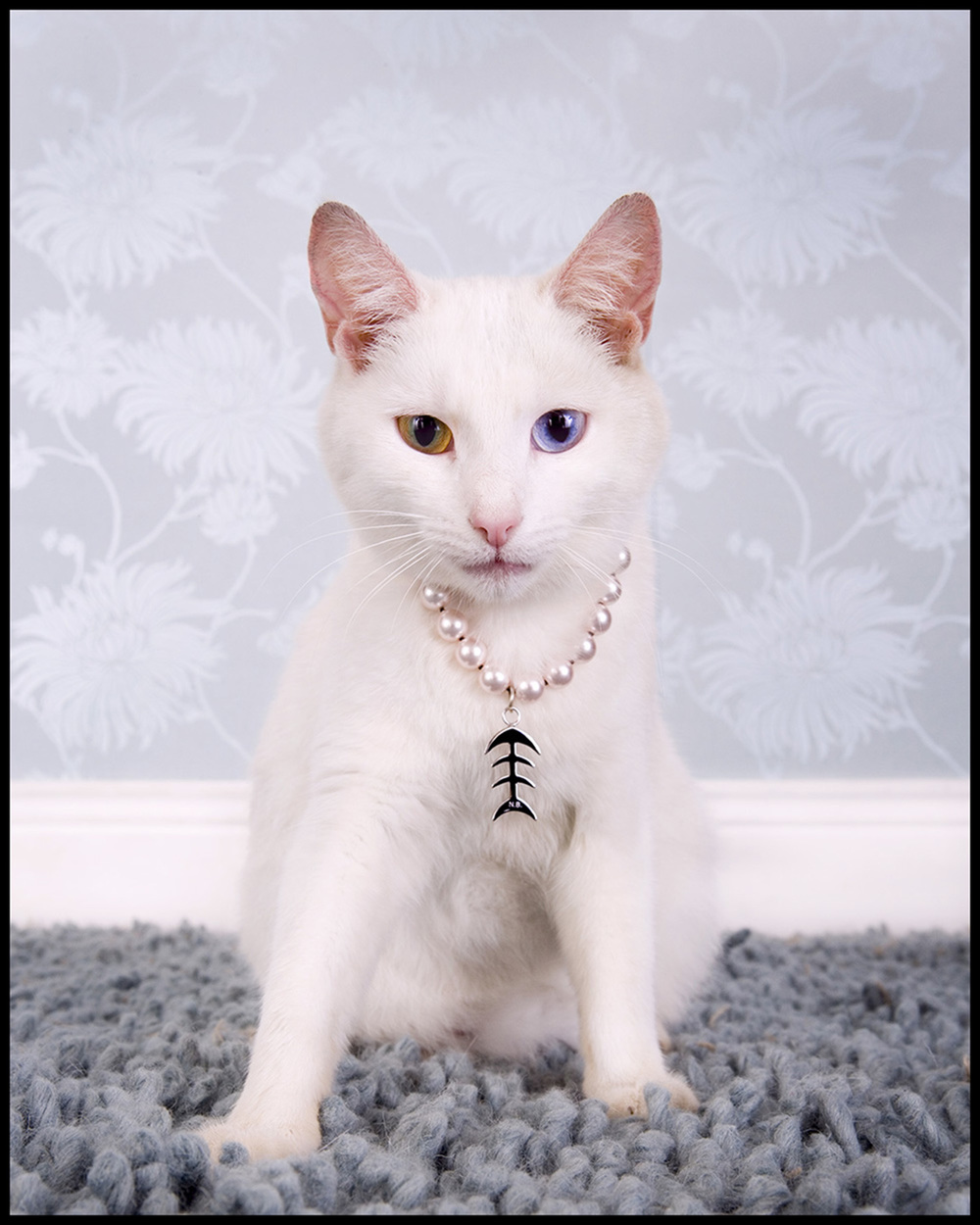 Cat Jewellery for Image Magazine