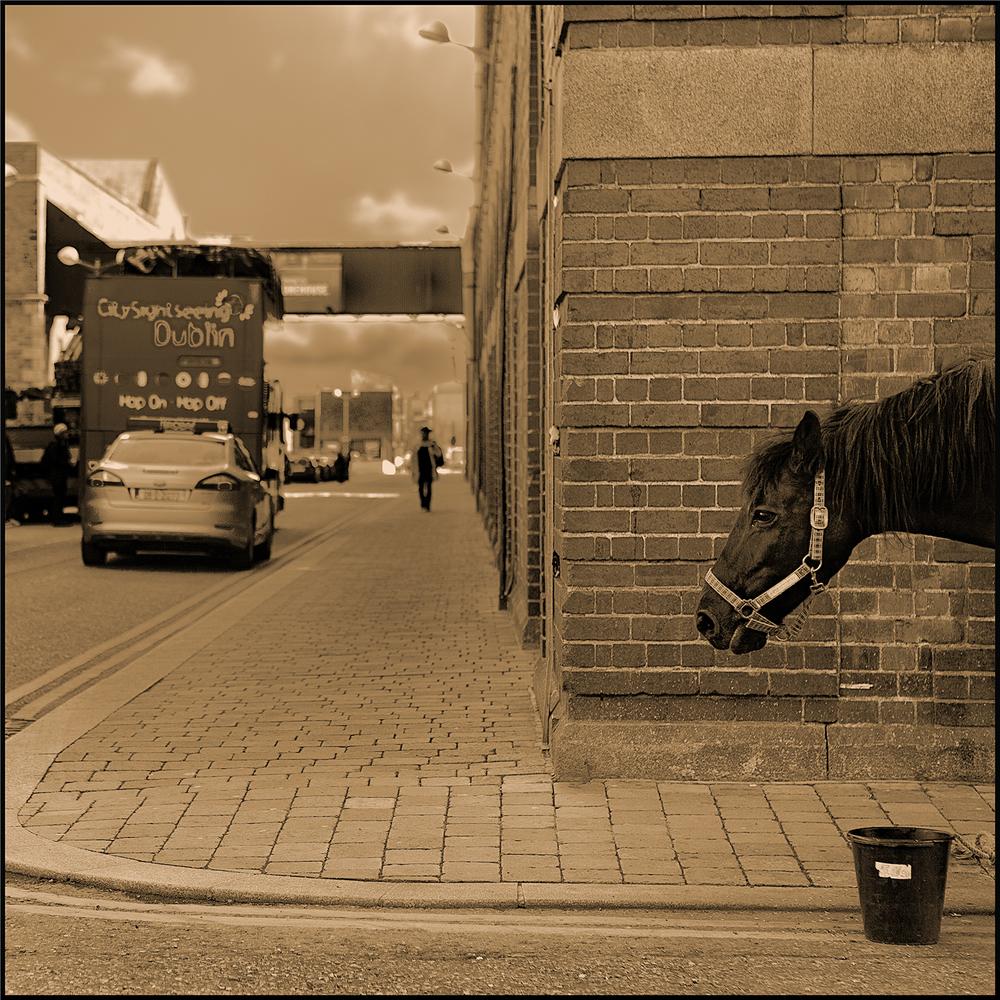 Horse0022.jpg