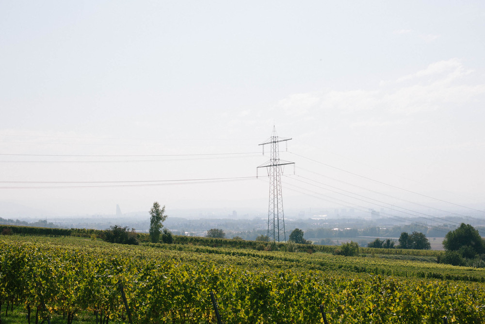 The vineyards in Binzen and the Basel skyline in the haze behind.
