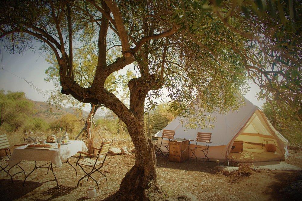 van onder de olijfboom 50%.jpg
