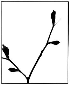 form13.jpg