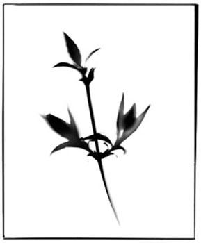 form15.jpg