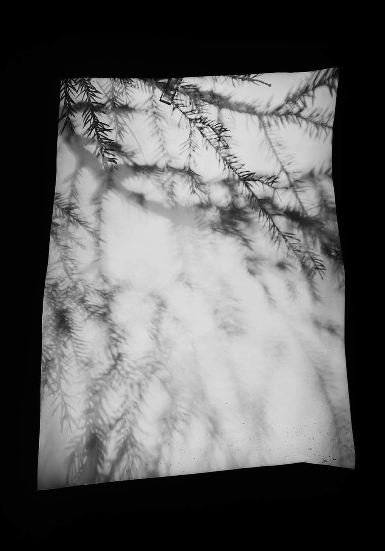 Grove-Twig-1.jpg