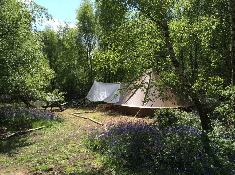 Beech Estate - The Secret Campsites - Glamping.png