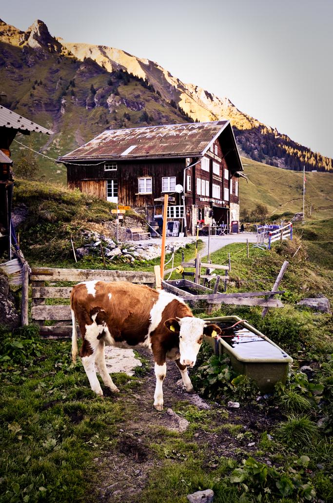 12_Life_Lausanne_Murren-4729_Low2.jpg