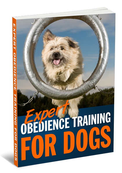 Expert-Obedience-Training-for-Dogs-3D-Large.png