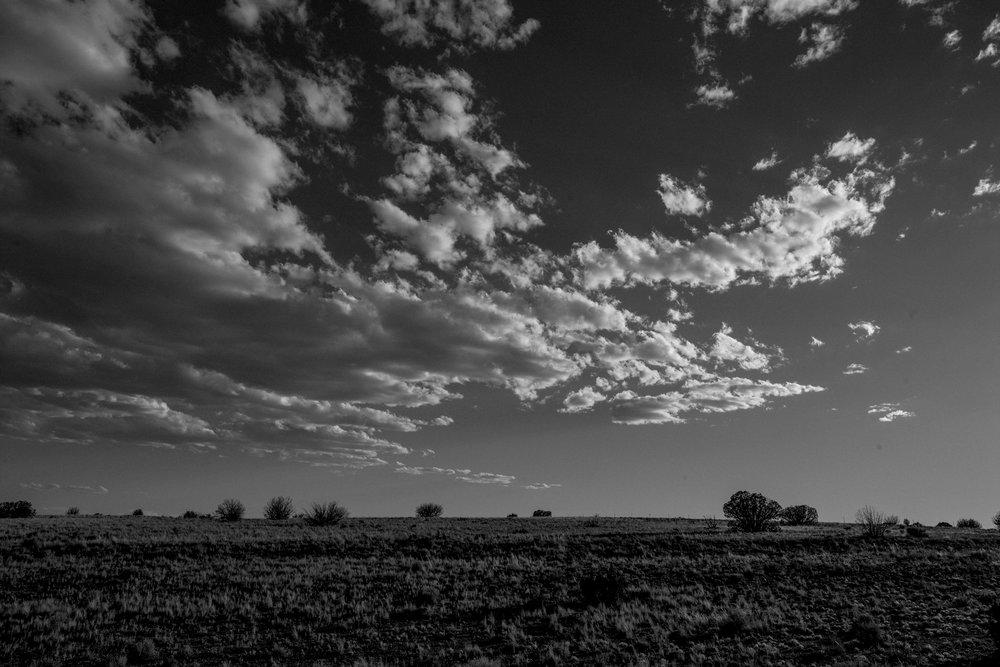 wolverine-desert-deanbradshaw-288.jpg