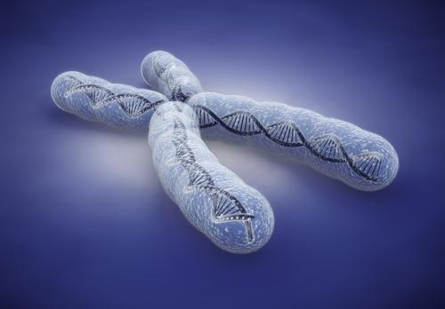 chromosomes richards on the brain