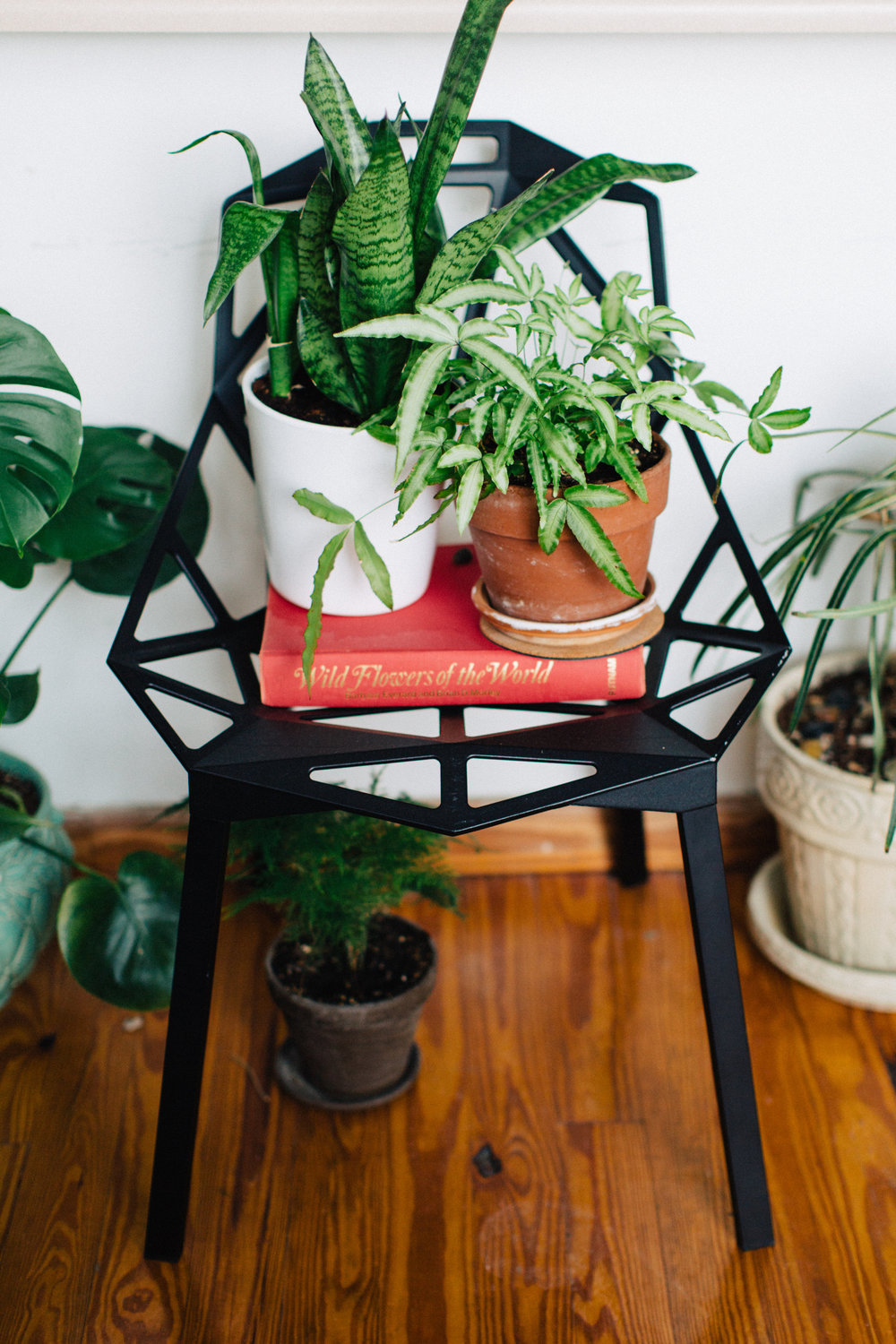 Houseplant Blog