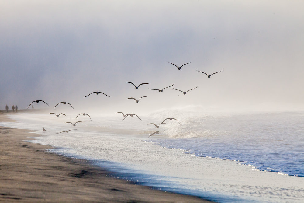 Coasting  A morning on Rio Del Mar Beach, CA   Purchase