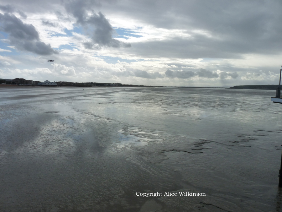 low tide without dogs