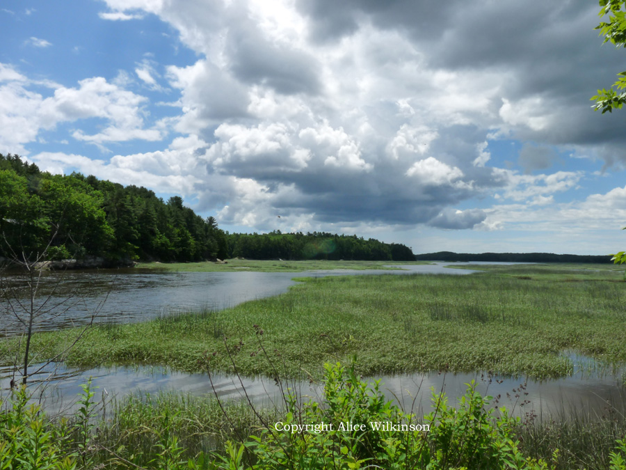 marsh on old Rte. 1, #7