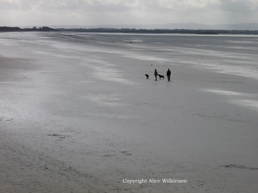2 dogs on a beach