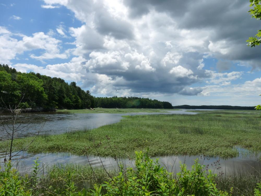 marsh on old Rte. 1 #7