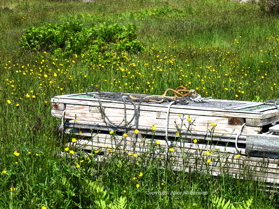 boards and buttercups