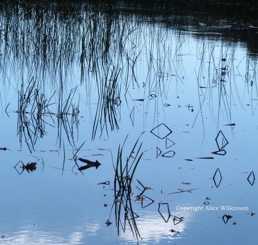 grass relflected