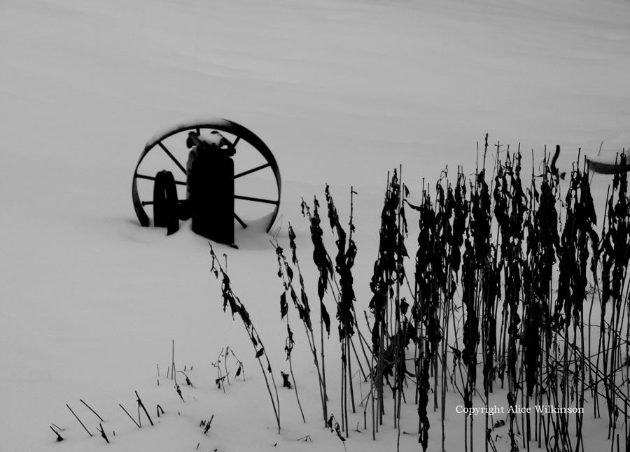 wheel and stalks