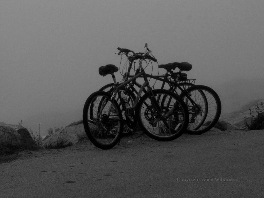 bikes in the fog