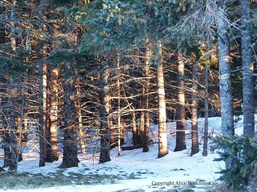 sunlit trees