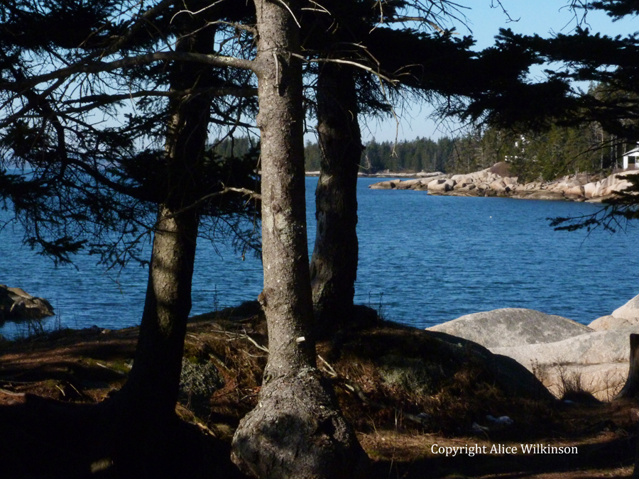 3 spruce trees